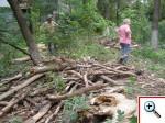 Вывоз дерева на Филатова