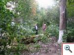 Вывоз упавшего дерева